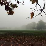 霧のクライストチャーチ植物園&ハグレーパーク