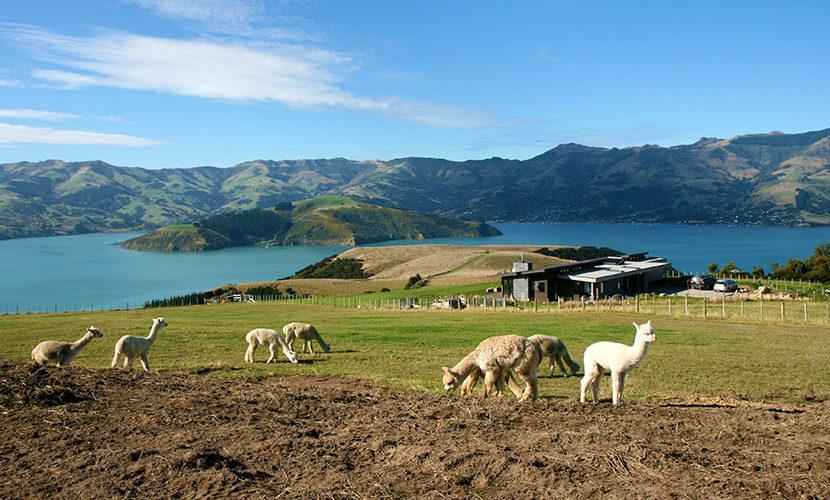 ニュージーランドでファームステイ
