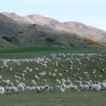 出来立てピーナッツバターの量り売り:ニュージーランドのスーパー事情