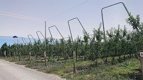 ニュージーランドのリンゴ農園