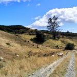 ニュージーランドでお留守番「ハウスシッター」というホリデーの過ごし方